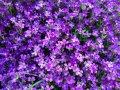Premieres fleurs de printemps :)